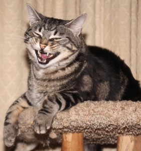 laughing cat - Copy
