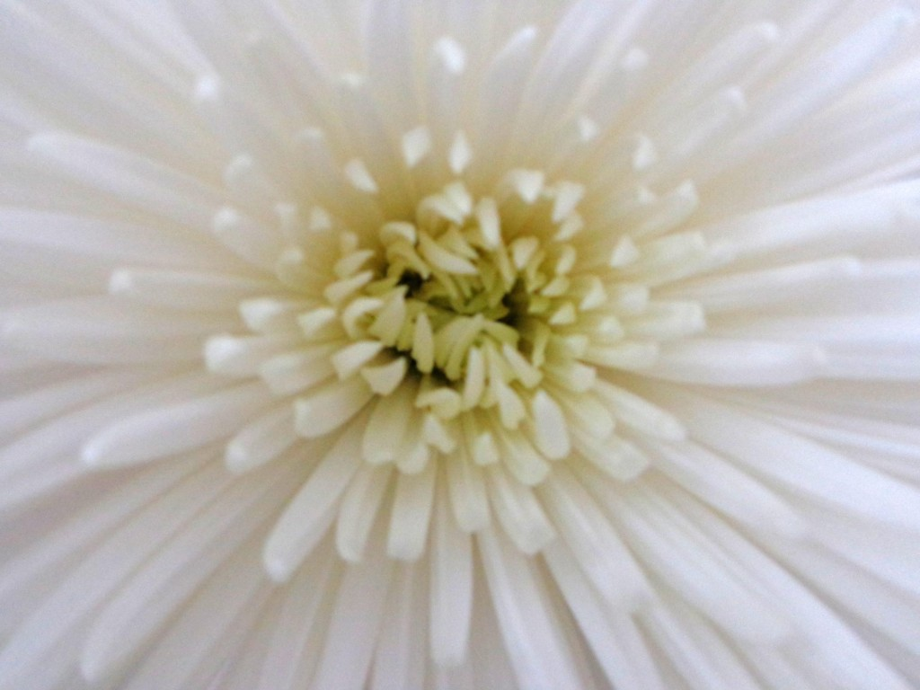 white starburst - Copy